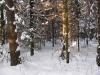 Зима в Монино (1)