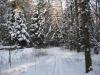 Зима в Монино (5)