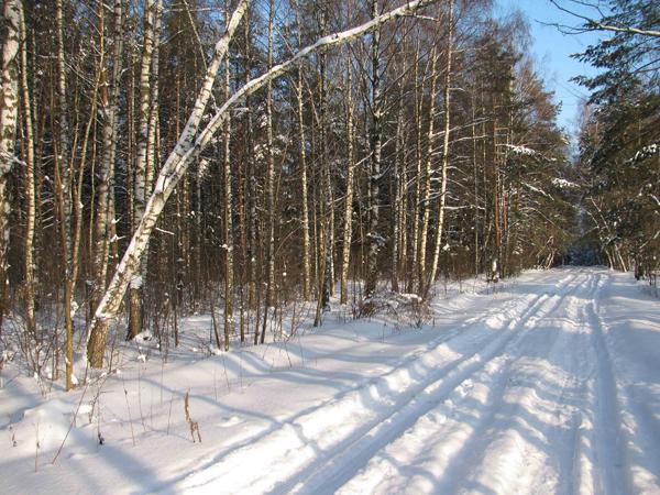 Зима в Монино (13)